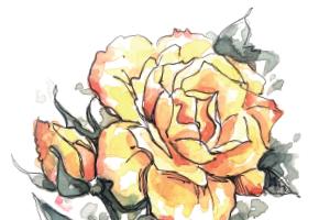 La rosa Bettina